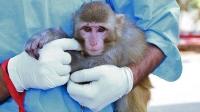 İran Uzaya İkinci Defa Maymun Gönderdi