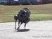 Boston Dynamics Robotlarından Bigdog