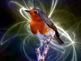 Elektrikli Aletler Kuşların Manyetik Pusulasını Bozuyor