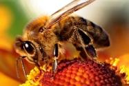 Doğanın Dengesine Yeni Çözüm Robot Arılar | Makineleşen Dünya 1. Bölüm