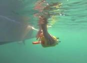 Su Altı Canlılarından Esinlenerek Geliştirilen Robotlar