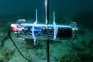 Mercan Resifleri Yapay Zeka ile Yeniden İnşa Ediliyor
