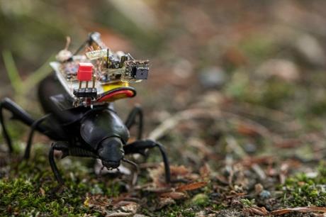 Böceklere Kamera Yerleştirildi
