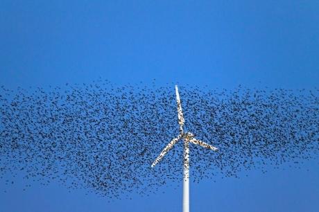 Kuşlar Rüzgar Türbinlerine Çarpmayacak!