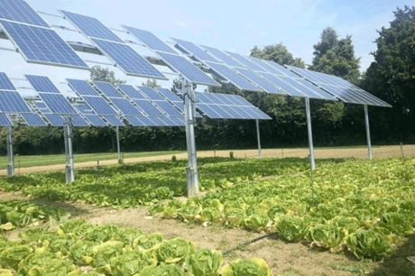 Renkli Güneş Panelleri ile Gıda ve Temiz Enerji Üretilebilir