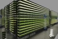 Rüzgar Enerjili Dikey Çiftlik 1.000 Ton Yeşillik Üretecek