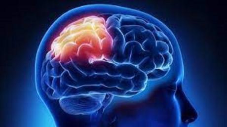 3D Baskılı Biyoreaktörlerde Yetişen Beyin Organoidleri Geliştirildi
