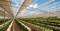 Agrivoltaik Sistem ile Güneş Enerjisi Üretimi