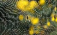 Aşırı Isınmaya Karşı : Örümcek İpeği