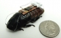 Uzaktan Kumandalı Hamam Böceği