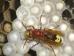 Petekler arıları birbirinden yalıtır