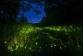 Ateş Böceği LED'e ilham veriyor