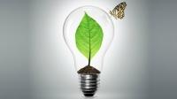 Enerji Hasadı | Bitkilerle Doğrudan Enerji Üretimi