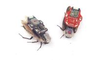 RoboRoach | Yarı Robot Yarı Canlı Hamamböceği