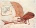 Da Vinci'nin uçuş makinelerinde biri