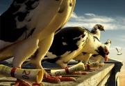 Posta Güvercinleri Sırt Çantasıyla DÖNÜYOR