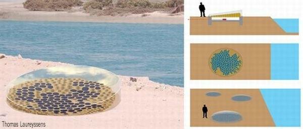 7) Alglerden esinlenilmiş yapı:     Yapı, çeşitli amaçlar için enerji depolayıp, üretebilen güneş pilleri içeriyor.