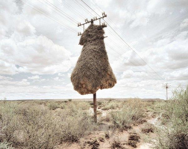 Dışarıda sıcaklık 16-33 derece iken ,yuvalarda ise sıcaklık 7-8 derece civarında oluyor.