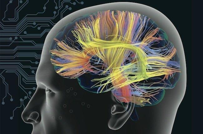 Google Brain: Google bu projeyle insan beyninin kopyasını çıkararak, insani düşünce ve davranışların enjekte edilebileceği makineler üretmeyi amaçlıyor. Google Brain projesi kapsamında insan beynindeki 100 milyar sinir hücresinden, yaklaşık 1 milyonu başarı ile taklit edilebildi.