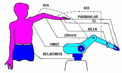 Robot kolu; insan kolunun en optimal kıvrımlara sahip olmasından rahat hareket etme yapısından esinlenerek yapılmıştır.