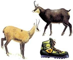 Kışlık botlar; dağ keçilerinin toynaklarının dik bayırlarda kolayca çıkabilmesinden esinlenerek, kaymayan taban yapılmıştır.