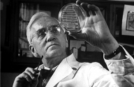"""Penisilinin Babası: Alexander Fleming  İskoç hekim. 1928 yılında, laboratuarında bir tür bakteri üzerine çalışırken, kültür ortamında oluşan küf mantarının çevresindeki bakterilerin gelişemediğini gözlemledi. Bu küf mantarının bakterilerin çoğalmasını engelleyen bir madde salgıladığını saptayan Fleming, bu maddeye """"penisilin"""" adını verdi. Böylece bakterilere karşı antibiyotik kullanımını başlattı."""