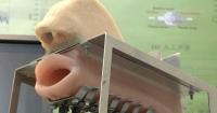 Robot Ağız: Bir insan ağzına benzeyen robot ağzı, akciğerler için bir hava pompası olması amacıyla kullanılıyor. Ses telleri, silikon dili ve açılıp kapanan burun deliğine sahiptir.