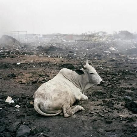 Maalesef, eritilen metallerden çıkan dumanlar ve yanan enkaz, çevreye son derece zararlı. Agbogbloşenin toprağı ve suyu, bugün yüksek oranda kurşun, merkür, talyum ve hidrojen siyanür gibi zehirli elementler içeriyor.