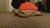 Hasta Kaplumbağa 3D Yazıcı Sayesinde Tedavi Oldu
